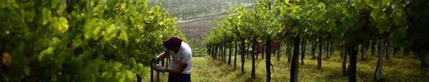 <!--:es-->El vino, un lujo que comienza a escasear<!--:-->