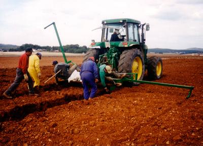 1989-1990 primeras-plantaciones-verdejo